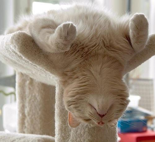 Спящие коты — большая подборка смешных фото с котиками во время сна