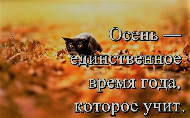 Красивые картинки и цитаты про осень жизнь любовь смотреть, марта
