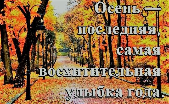 Смешные фразы про осень