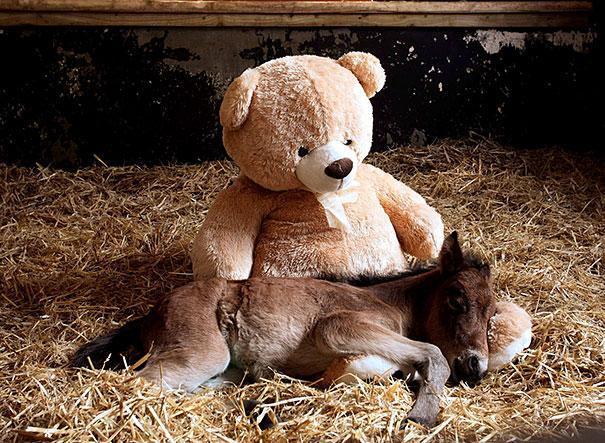 animals-sleeping-toys-40.jpg